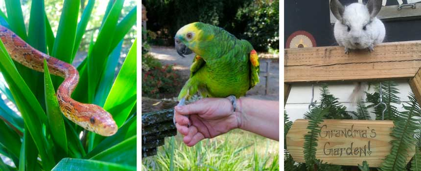 Animals Rescued by Enchanting Animals