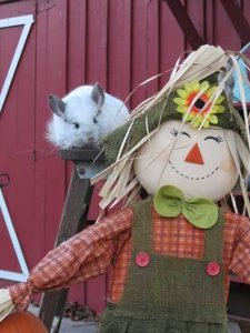 Chinchilla With Scarecrow