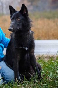 Good Wolf Dog